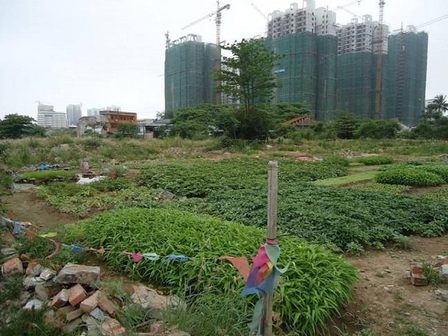 đất nông nghiệp lên giá
